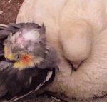 PigeonsAndRust's image